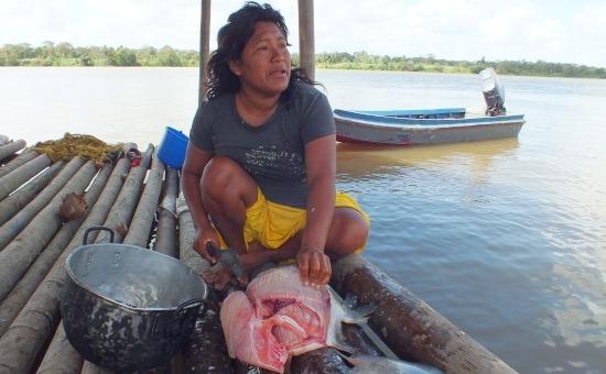A waraók legfontosabb tápláléka a hal