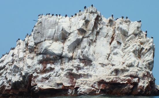 Szulák keretezik a partmenti sziklákat