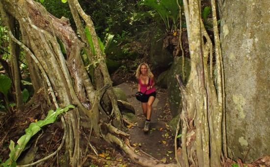 Az erdei ösvény gyönyörű és misztikus