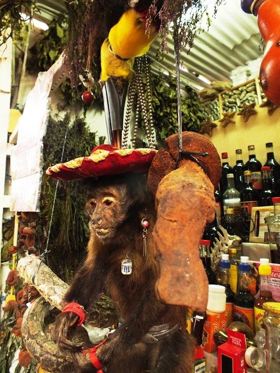 A chiclayói boszorkánypiac: tukán az aszaltmajom fején