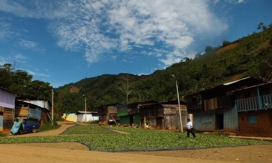 Catarata faluja Peru egyik legfontosabb kokatermő vidéke