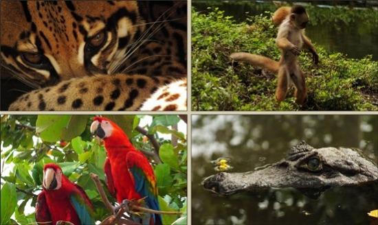 Sivia állatkertje szomorú látvány, de sok szép állatot lehet lencsevégre kapni