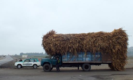 Barranca környékén a legkönnyebb a cukornádat szállító kamionokat lestoppolni