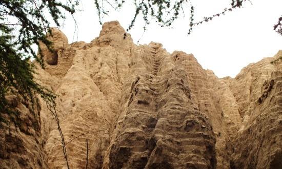 A fák közül előbukkannak Batán Grande egyik piramisának maradványai