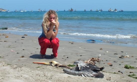 A tengerpart tele van döglött pelikánokkal
