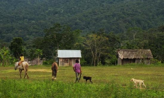 Alfonso (San) felesége és lánya yukkáért megy az erdőbe, hogy enni tudjanak nekünk adni
