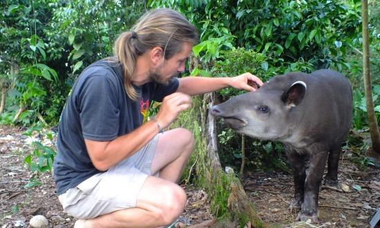 Florencio a legkezesebb vad tapír, amit valaha láttam