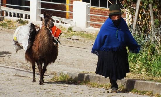 Ma már ritka látvány Ecuadorban a lámákat vezetgető indiánasszony