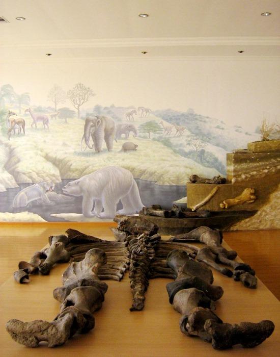 Az óriás csontváza Santa Elenában (forrás: www.ucmp.berkeley.edu)