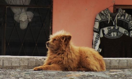 Ismét fent az Andokban... a kutya is fázik