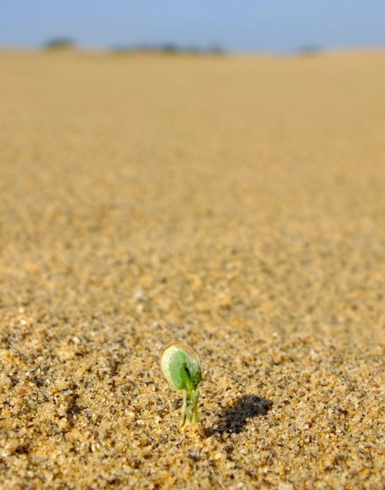 Élet sarjad a sivatagban
