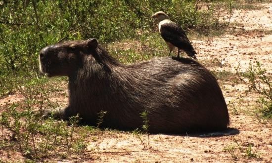 Nem mindennapi kép a Los Llanosról