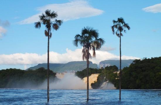 Canaima jelképe a lagúnából kinövő három pálmafa
