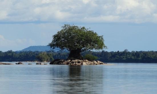 Magányosan ácsorgó fa a Rio Caura közepén
