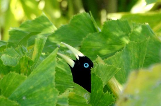 Egzotikus madarak bújnak meg a fák levelei között