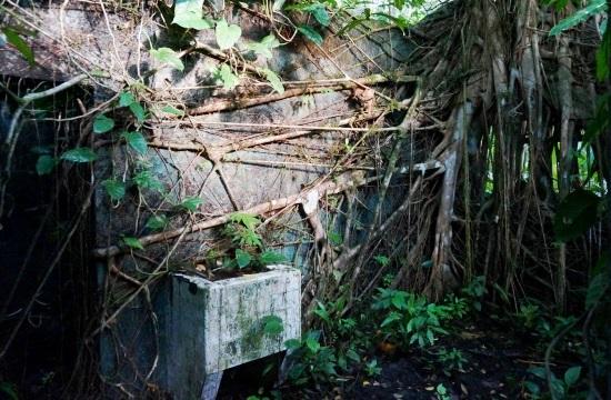 Az erdő elnyelte a kórházat