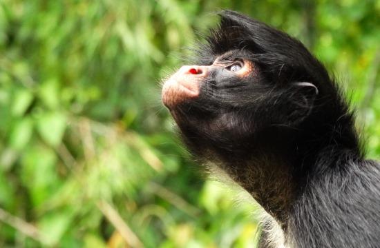 Némelyik majom furcsán viselkedik a parkban