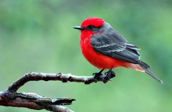 Egy madár legalább megmutatta magát