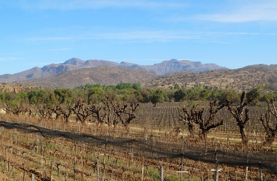 A Concepciók környéki szőlők 2000 méter magasan teremnek