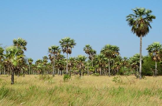 A Rio Pilcomayo Nemzeti Park szavannája