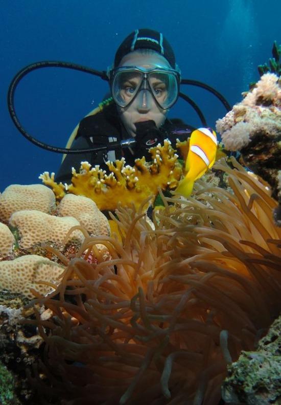 Búvár egyiptom vörös-tenger bohóchal