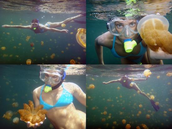 fotó video medúza egzotikus