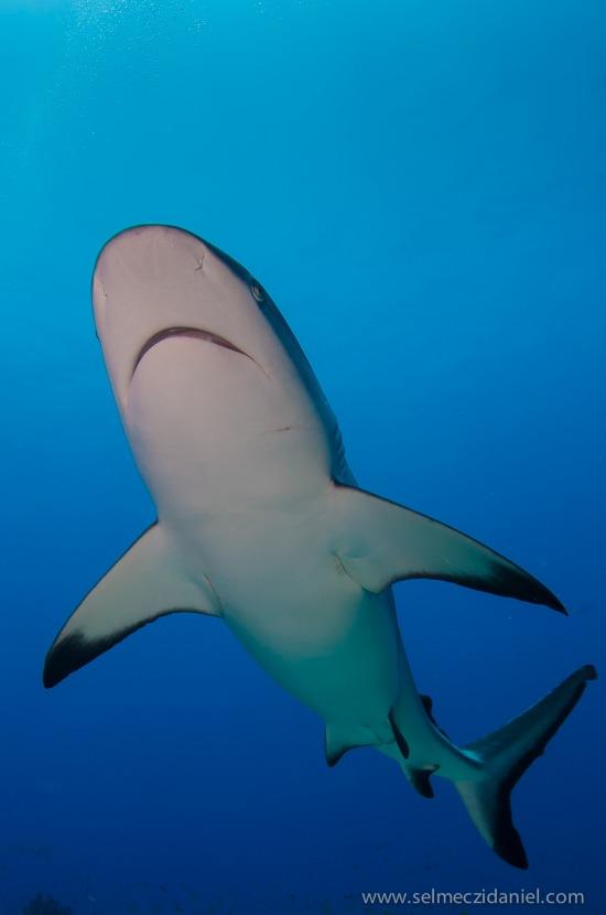 cápa egzotikus fotó