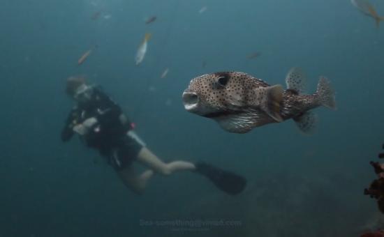 thaifold utazás egzotikus video
