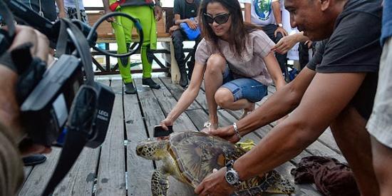 teknős híresség film