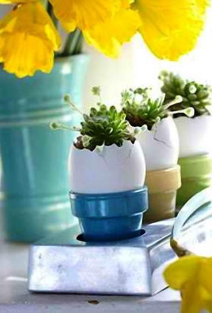 Kristin's Egglets5.jpg