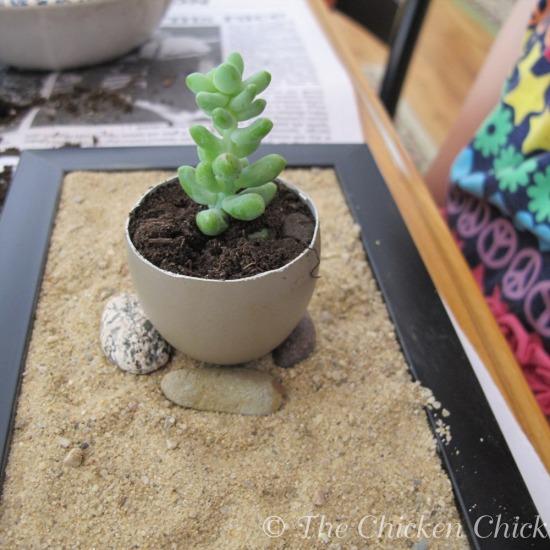 Zen Egg Garden (10).jpg