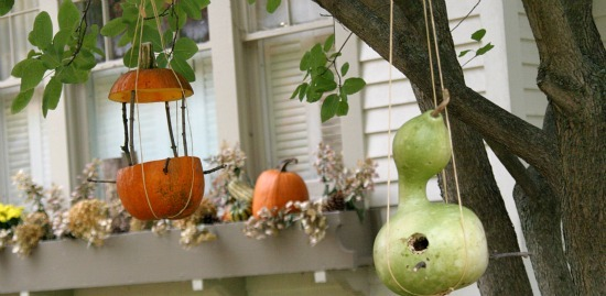 Pumpkin-Feeder.featured.jpg