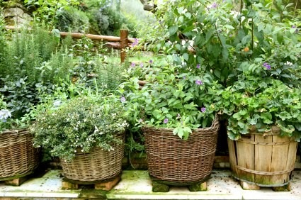 garden - gardening - garden ideas - garden barrel planters - wood barrel planters DIY garden ideas gardening - wicker basket garden planter via pinterest2.jpg