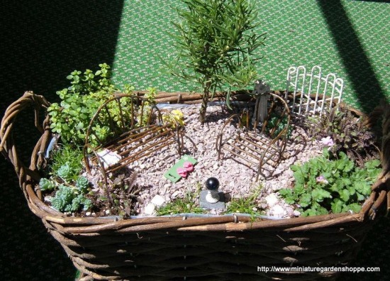 miniature garden 2 (30).JPG