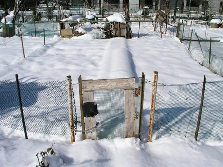 orto con neve.jpg
