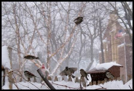 birdfeeder-c-fr-mtpmcg211-sm-0429.jpg