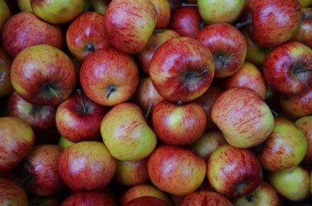 Sok kertben apró maradt az alma.jpg