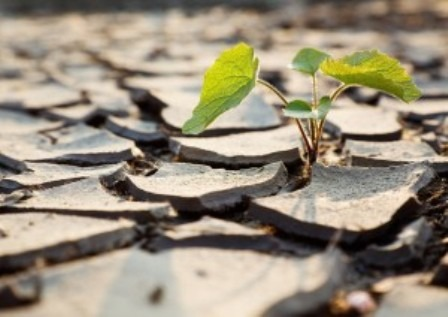 bigstockphoto_Plant_Fighting_Drought_49887343-300x212.jpg