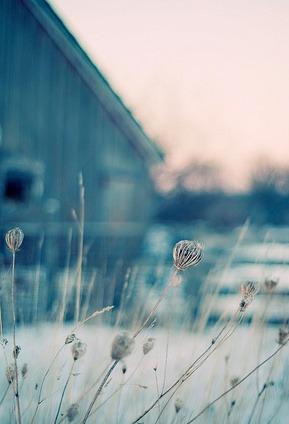 téli virág.jpg