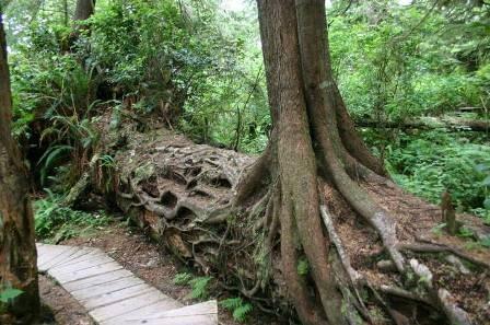 a fák is segítenek a szervesanyag lebontásában.jpg