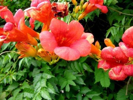 Csábító virágok.jpg