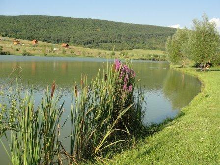 Cser-tó (P. Kovács Ágnes).jpg