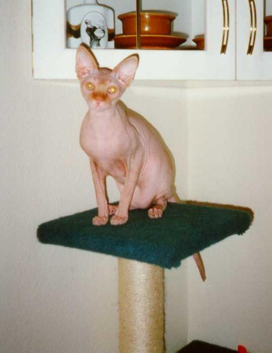 Macskás tárgyak 03bb00a7cc