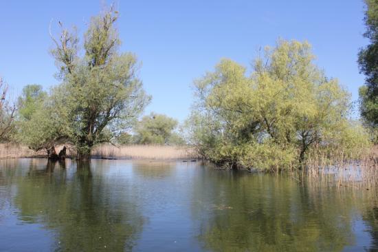 WWF Dráva vizes élőhelyek