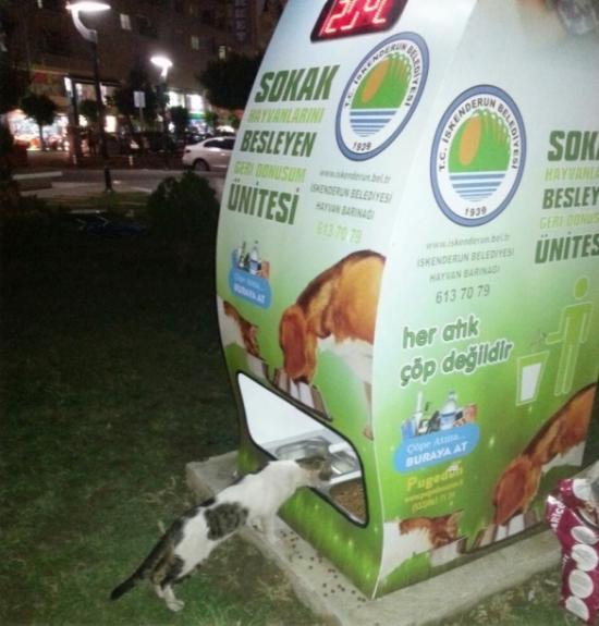 szelektív hulladékgyűjtés állatvédelem hulladék
