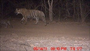Forrás: Ranthambore forest department