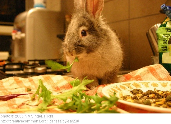 nyúl salátával