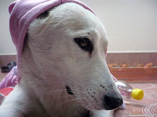 Brumibaby kutya állat