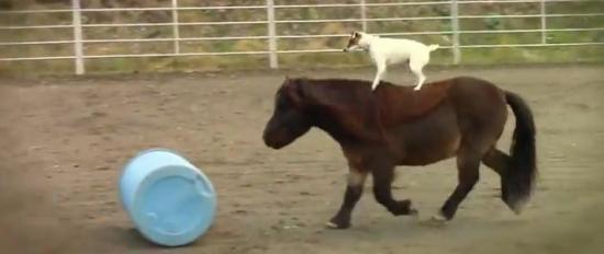 kutya póni ló lovagol